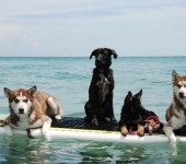 Dogs Beaches and Brews: April