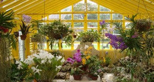 Greenhouse Tours @ Bonnet House | Fort Lauderdale | Florida | United States
