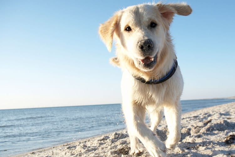It's a Dog's Life on Fort Lauderdale Beach