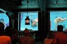 wreck bar mermaid shows