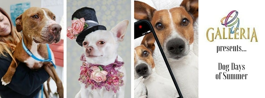 "THE GALLERIA AT FORT LAUDERDALE HOSTS SECOND ANNUAL ""DOG DAYS"" EVENTS"