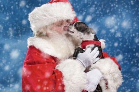 Santa Paws Pet Photos at The Galleria at Fort Lauderdale @ The Galleria at Fort Lauderdale