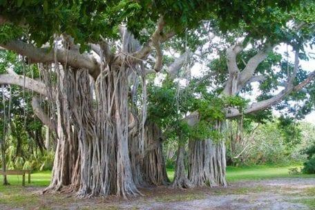 Mangrove Habitat Walk @ Hugh Taylor Birch State Park