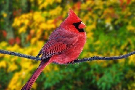 Birding Class @ Bonnet House