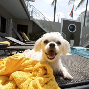 grand resort pets