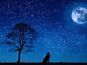 moon-dog-647528_1280_0