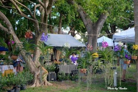 Orchid Festival @ Bonnet House Museum & Gardens