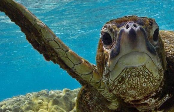 Save the Sea Turltes