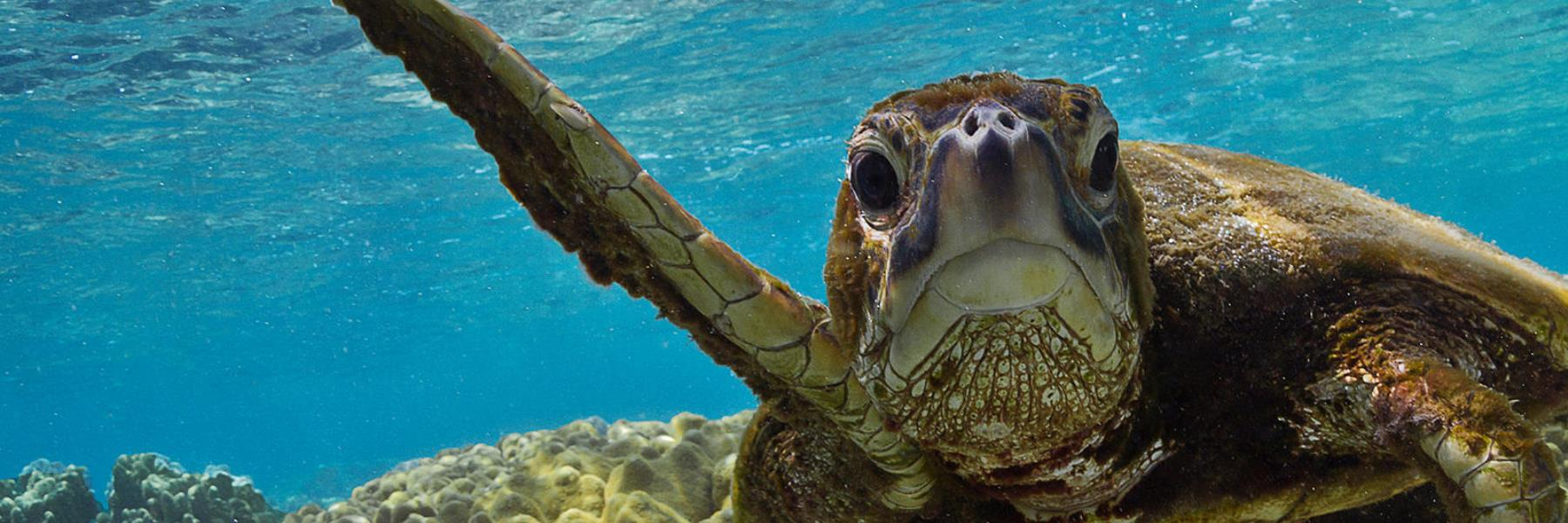 Sea Turtle Season | March 1 – Oct 31