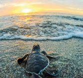 Turtle Treks Return to Fort Lauderdale Beach