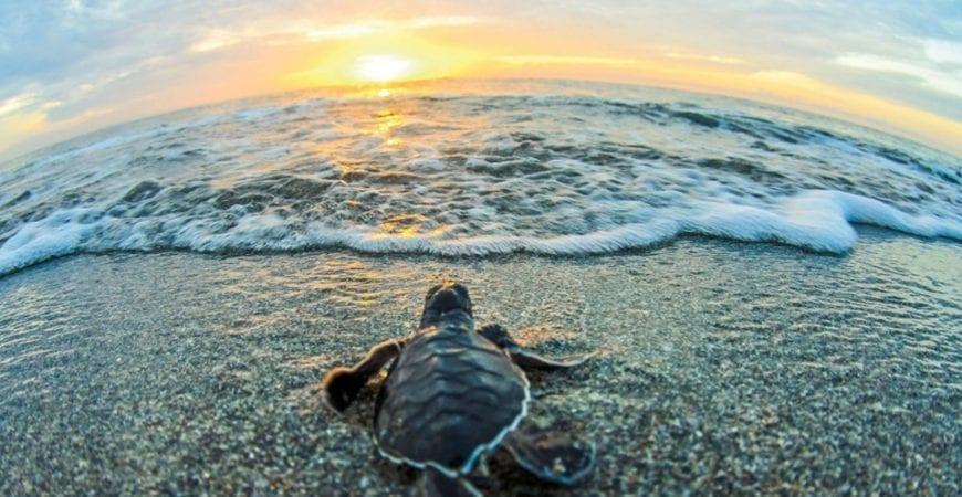 turtle trek walks