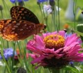 Flora & Fauna Classes